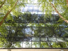 photo of reflection in trees on glass side of Sheps Center Building